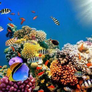 Reef Happy Sunblocks for Summer