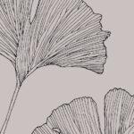 Gingko Biloba | Gaelle Organic